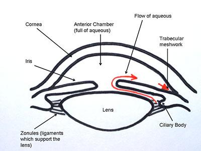 intraocular